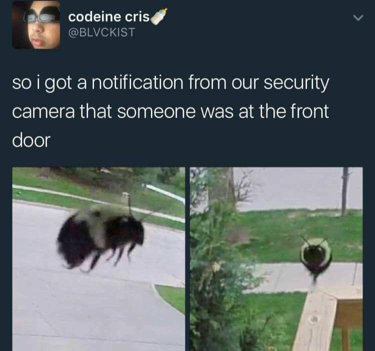 dank meme of a bee at the front door