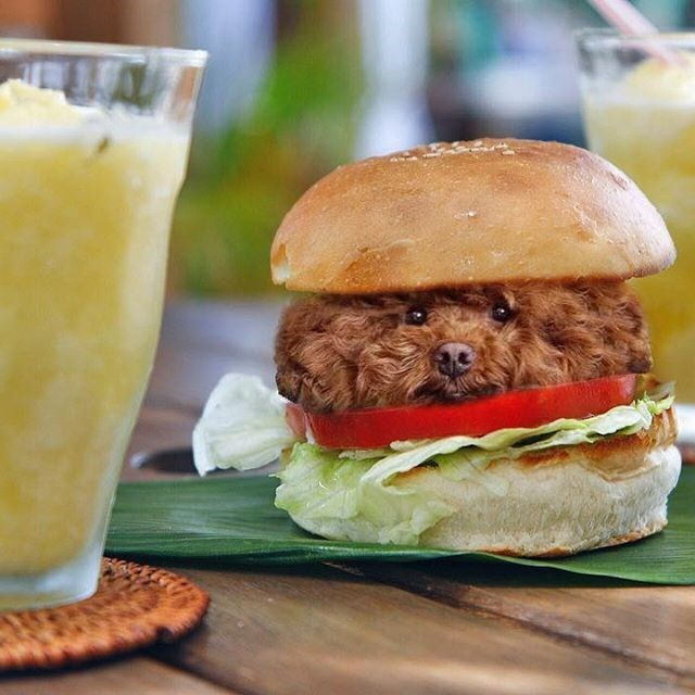 Cheezburger Image 9184454144
