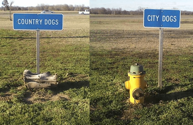 Land lot - CITY DOGS COUNTRY DOGS