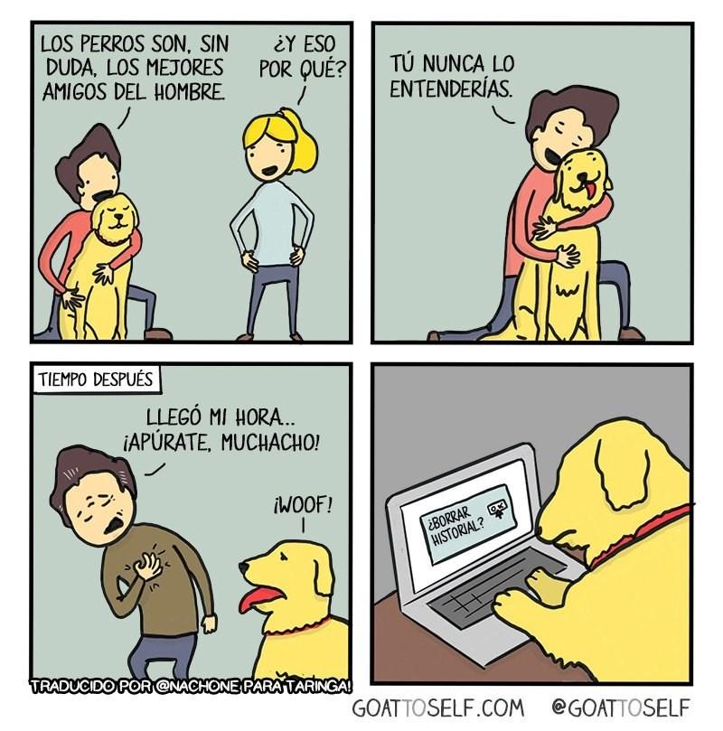 los perros son los amigos mas fieles borrar historial