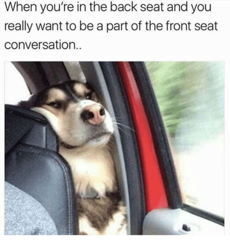 Dog - When you're in the back seat and you really want to be a part of the front seat conversatio..