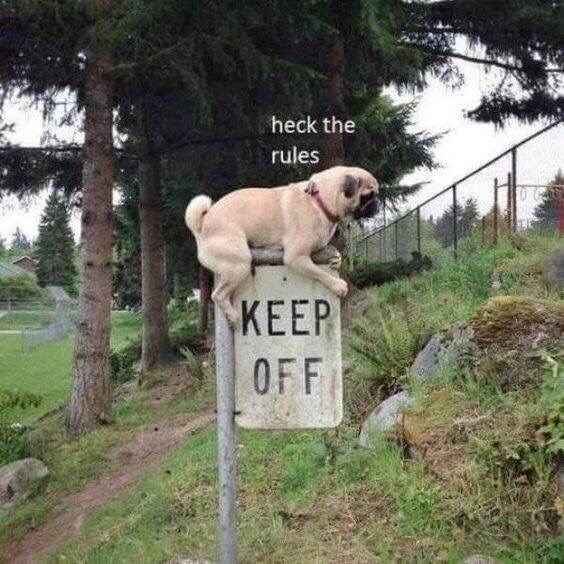 Dog - heck the rules KEEP OFF