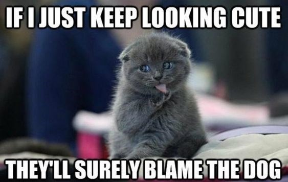 14 Times Cats Tried To Blame Everything On The Dog (Memes) - I Can Has  Cheezburger?