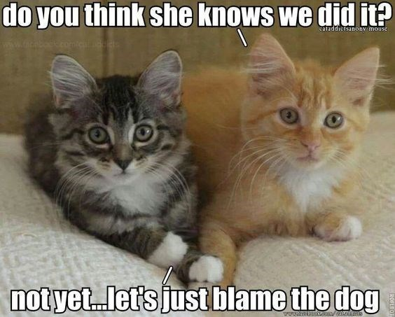 Cat - do you think she knows we did it? cataddictsanony mouse www.tacabodk.com.icnddet notyet.let's just blame the dog