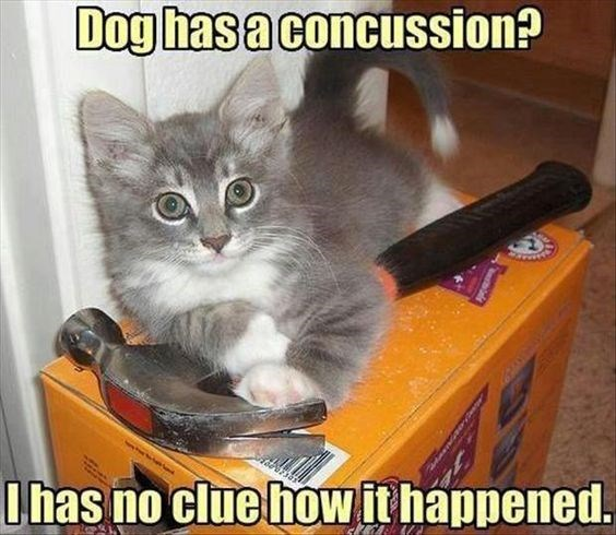 Cat - Dog has a concussion? lhas no clue howit happened.