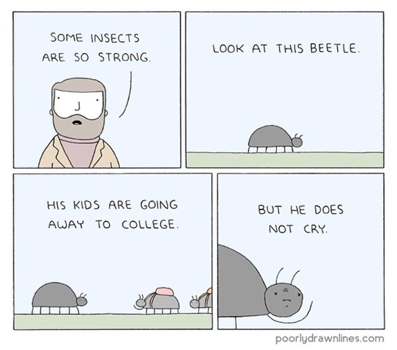 funny comic - Text - SOME INSECTS LOOK AT THIS BEETLE ARE SO STRONG HIS KIDS ARE GOING BUT HE DOES AWAY TO COLLEGE NOT CRY poorlydrawnlines.com