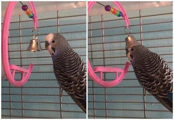Bird supply