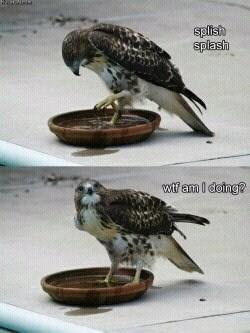 Bird - splish splash wif am I deing?