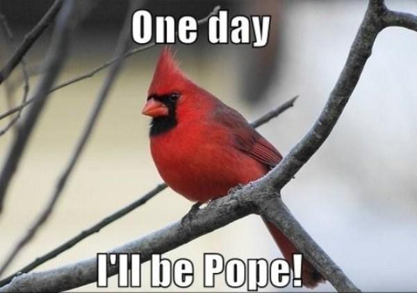 Bird - One day Cibe Pope!