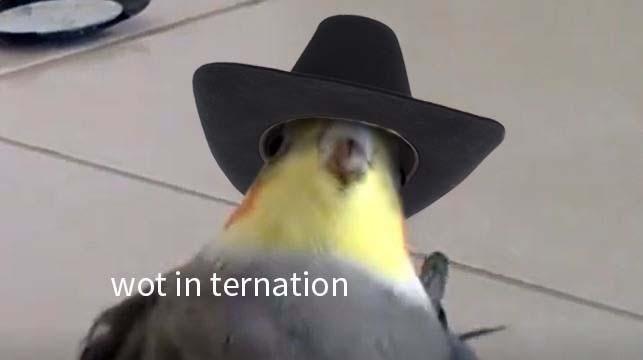 Bird - wot in ternation