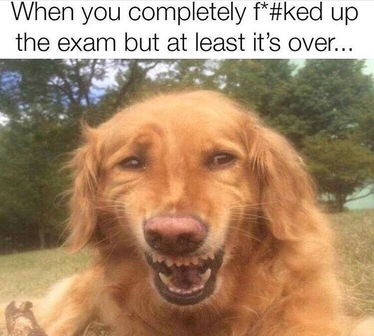 Dog - When you completely f*#ked up the exam but at least it's over...