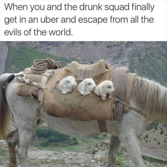 Vertebrate - When you and the drunk squad finally get in an uber and escape from all the evils of the world. MasiPopal