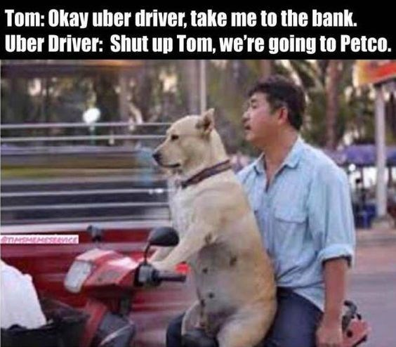 Canidae - Tom: Okay uber driver, take me to the bank. Uber Driver: Shut up Tom, we're going to Petco. STNSMEMESevncE