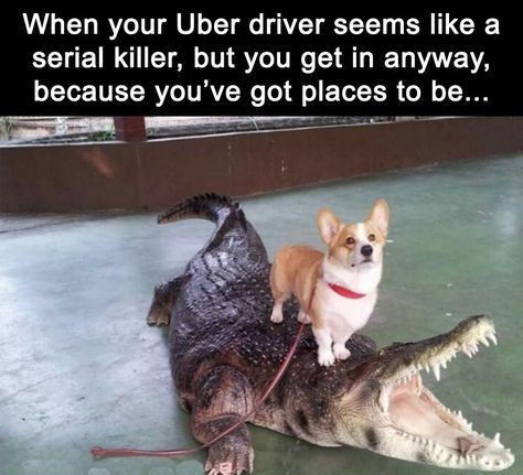 Dog - When your Uber driver seems like a serial killer, but you get in anyway, because you've got places to be...