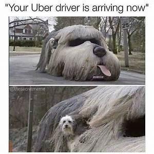 "Dog - ""Your Uber driver is arriving now"" 25 hesecretmeme"