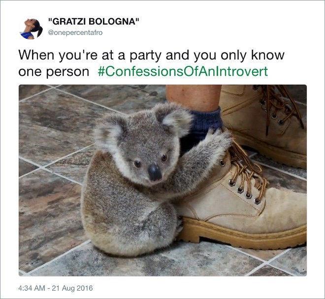 """Koala - """"GRATZI BOLOGNA"""" @onepercentafro When you're at a party and you only know one person #ConfessionsOfAnlntrovert 4:34 AM 21 Aug 2016"""