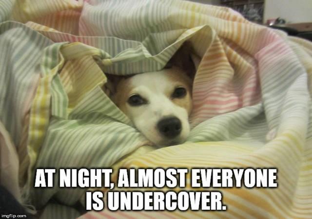 Mammal - AT NIGHT,ALMOSTEVERYONE ISUNDERCOVER.