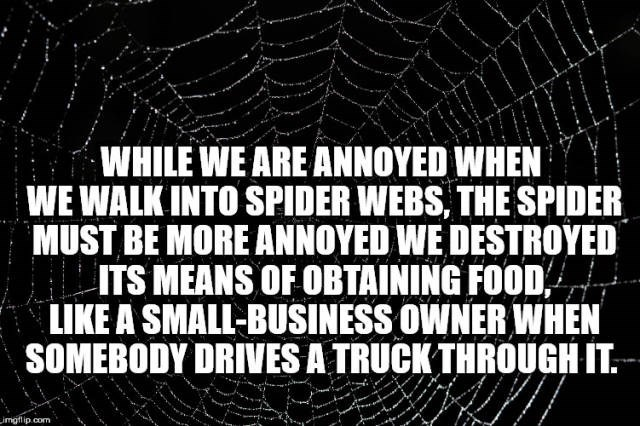 Font - WHILE WE ARE ANNOYED WHEN WE WALK INTO SPIDER WEBS, THE SPIDER MUST BE MORE ANNOYED WE DESTROYED ITS MEANS OF OBTAINING FOOD LIKE A SMALL-BUSINESS OWNER WHEN SOMEBODY DRIVES A TRUCK THROUGH IT. imgflip.com