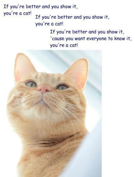 Cat - If you're better and you show it, you're a cat! If you're better and you show it, you're a cat! If you're better and you show it, 'cause you want everyone to know it, you're a cat!