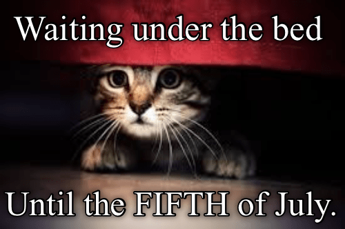 Photo caption - Waiting under the bed Until the FIFTH of July.