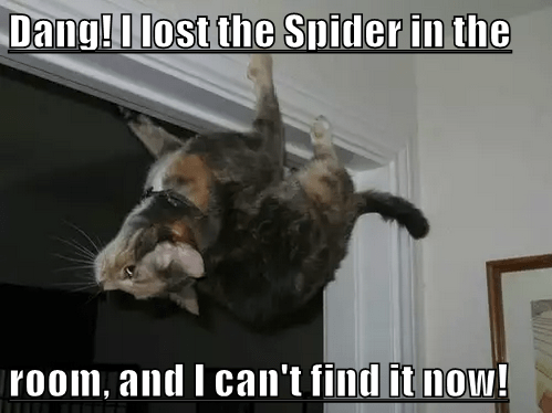 Cat - Dang!I lost the Spider in the |room, and I can't find it now!
