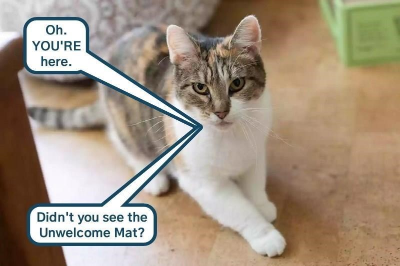 Cat - Oh. YOU'RE here. Didn't you see the Unwelcome Mat?