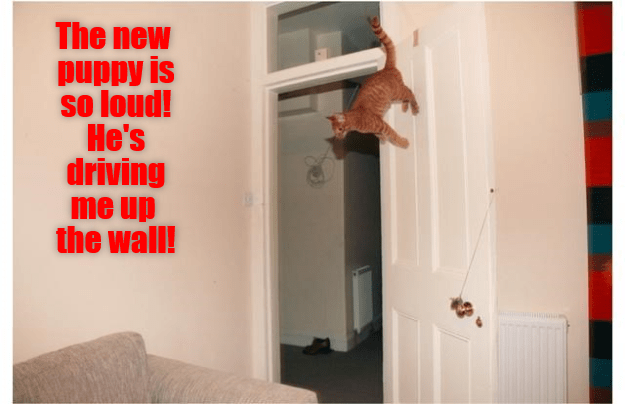 Red - The new puppy is so loud! He's driving me up the wall!