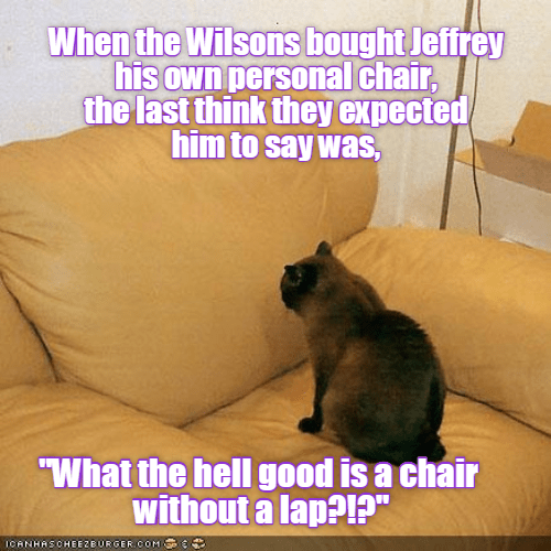 "Cat - When the Wilsons bought Jeffrey his own personal chair, the last think they expected him to say was, What the hell good is a chair without a lap?!?"" ICANHASCHEEZBURGER COM"