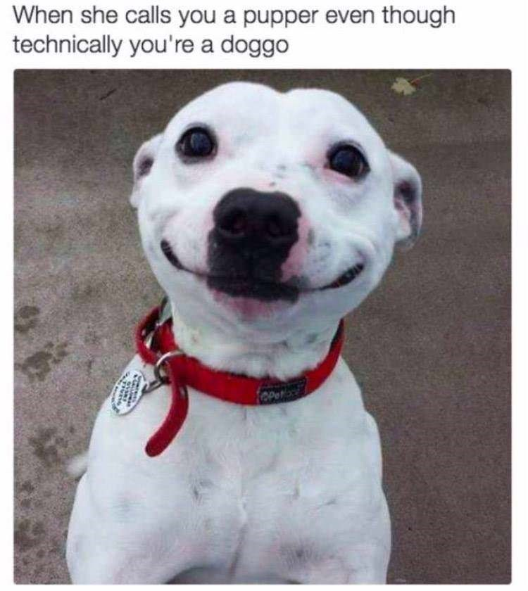 "Pic of a dog with a silly smile on its face with the caption, ""When she calls you a pupper even though technically you're a doggo"""