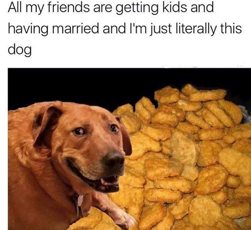 meme - Canidae - All my friends are getting kids and having married and I'm just literally this dog