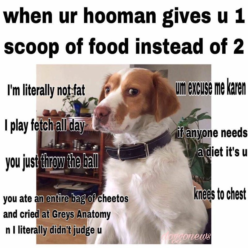 meme - Dog - when ur hooman gives u 1 scoop of food instead of 2 um excuse me karen I'm literally not fat Iplay fetch all day ifanyone needs a diet it's u you just throw the hall kmee's to chest you ate an entire bag of cheetos and cried at Greys Anatomy nI literally didn't judge u Aorigonews