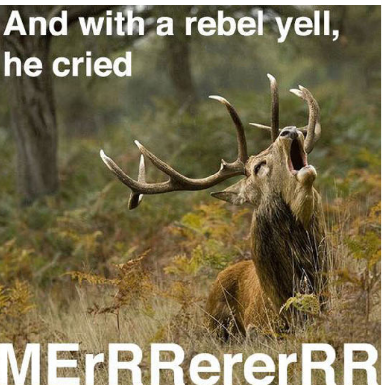 meme - Horn - And with a rebel yell, he cried MErRRererRR