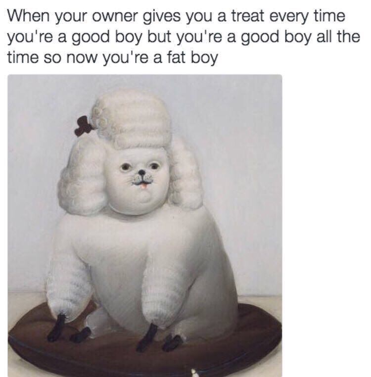 meme - Organism - When your owner gives you a treat every time you're a good boy but you're a good boy all the time so now you're a fat boy