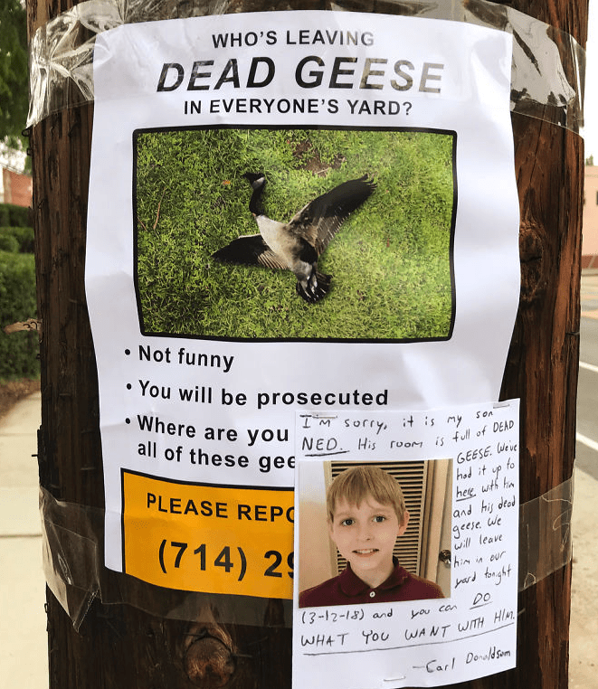 Wildlife - WHO'S LEAVING DEAD GEESE IN EVERYONE'S YARD? Not funny You will be prosecuted Where are you NED His room is full of DEAD all of these gee IM Sorry it is y GEESE Weve to hod it PLEASE REP hee wth ha and his deod 9ecse we (714) 2 will leave him it our yd fonght Do (3-12-18) and au can WHAT TOU WANT WITH HIR Carl Dolsom