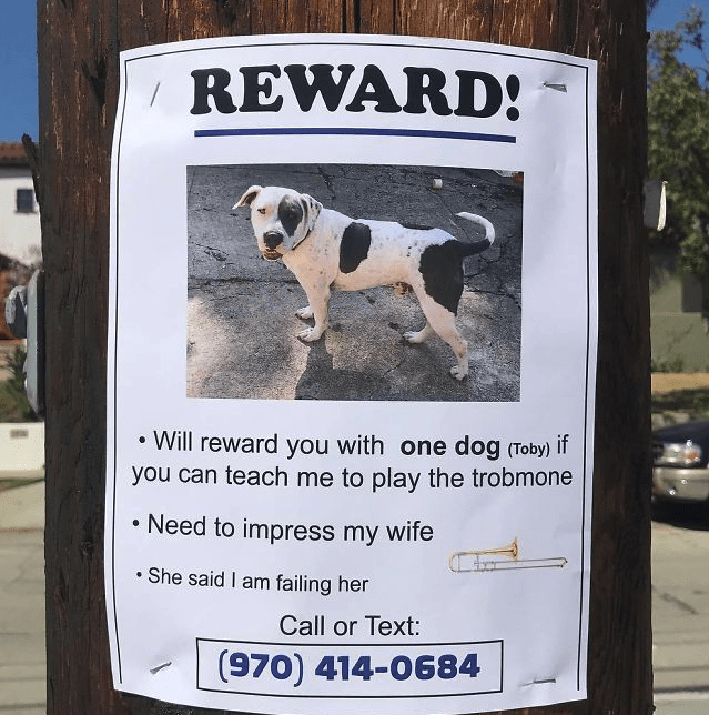 Dog - REWARD! Will reward you with one dog (Toby) you can teach me to play the trobmone if Need to impress my wife She said I am failing her Call or Text: (970) 414-0684