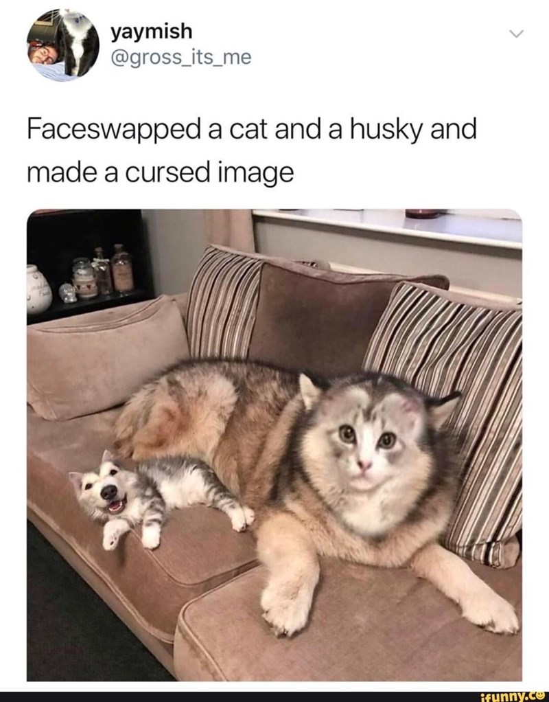 Faceswapped photo of a cat and a husky
