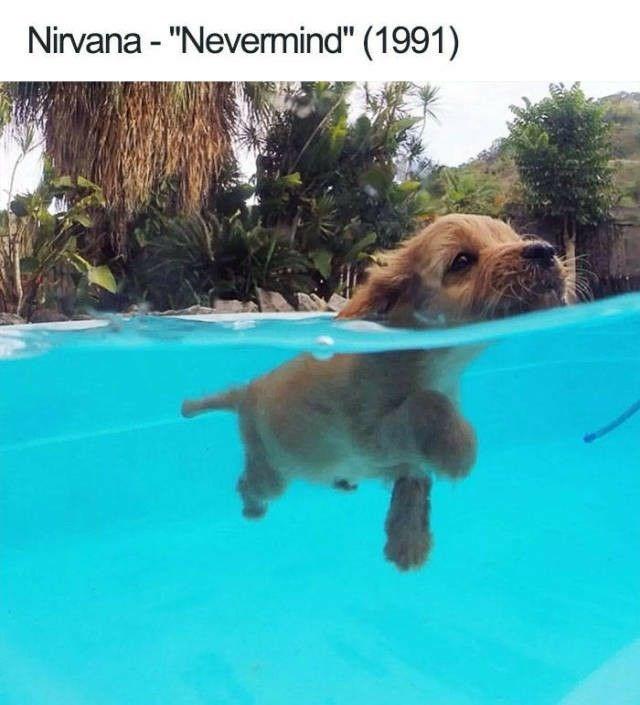 "music meme - Dog - Nirvana - ""Nevermind"" (1991)"