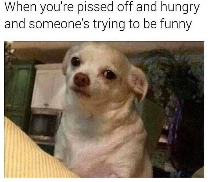"Picture of a dog looking annoyed with the caption, ""When you're pissed off and hungry and someone's trying to be funny"""