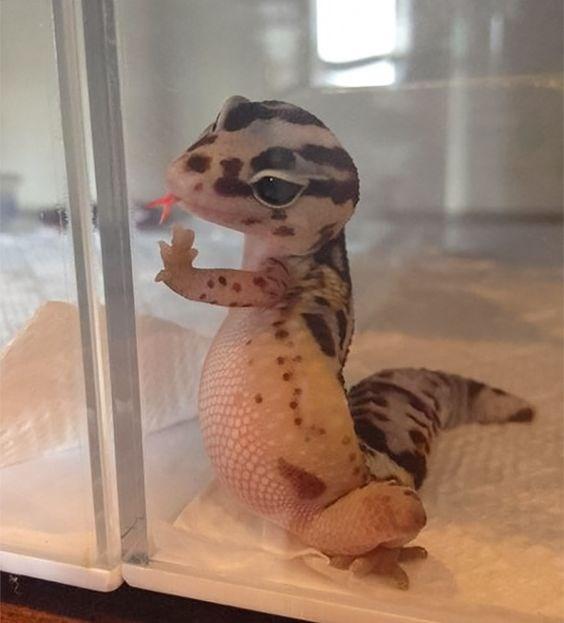 cute animals - Gecko