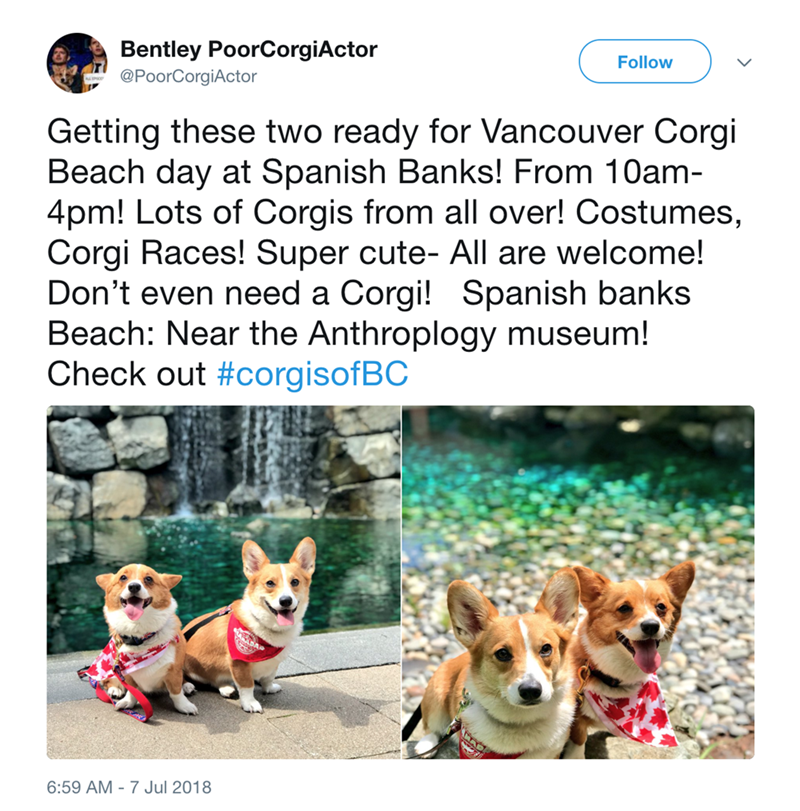 Dog - Follow Bentley PoorCorgiActor @PoorCorgiActor Getting these two ready for Vancouver Corgi Beach day at Spanish Banks! From 10am 4pm! Lots of Corgis from all over! Costumes, Corgi Races! Super cute- All are welcome! Don't even need a Corgi! Spanish banks Beach: Near the Anthroplogy museum! Check out #corgisofBC AD 6:59 AM - 7 Jul 2018