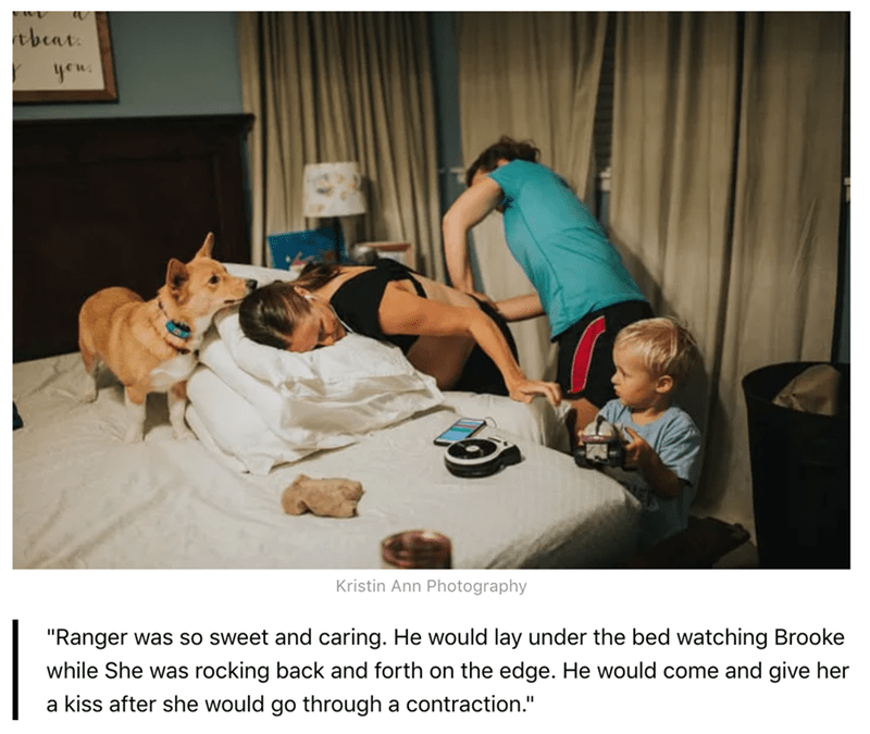 """Canidae - tbeat yew Kristin Ann Photography """"Ranger was so sweet and caring. He would lay under the bed watching Brooke while She was rocking back and forth on the edge. He would come and give her a kiss after she would go through a contraction."""""""