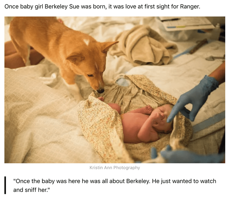 """Canidae - Once baby girl Berkeley Sue was born, it was love at first sight for Ranger. Kristin Ann Photography 