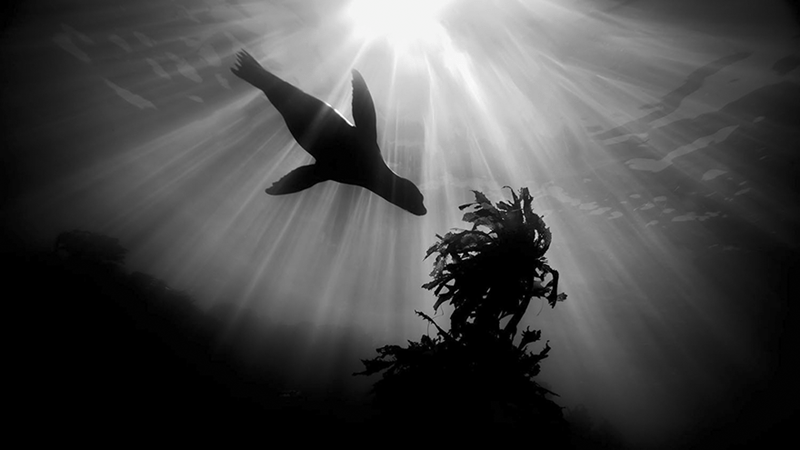 underwater photography contest - Black