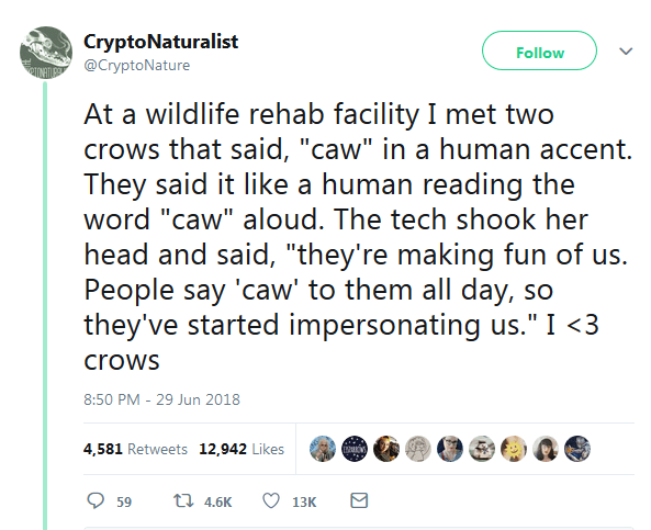 Funny tweet about crows making fun of humans.