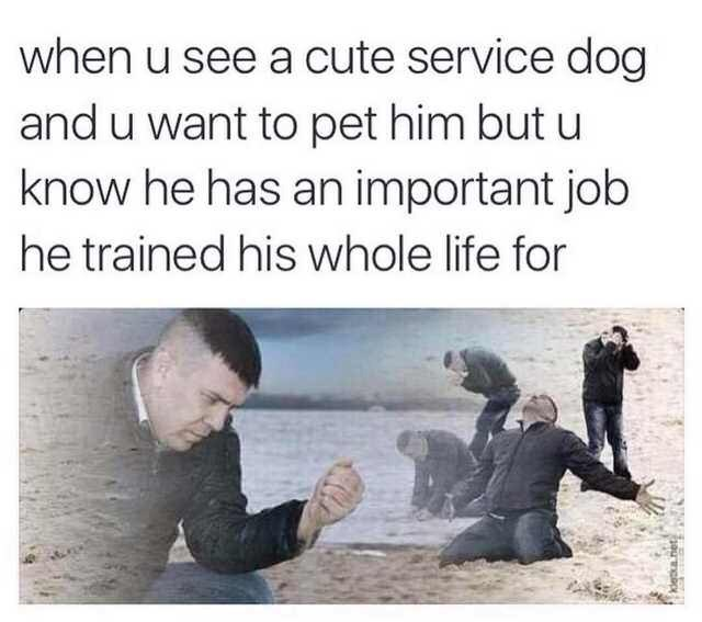 """When you see a cute service dog and you want to pet him but you know he has an important job he trained for his whole life"""