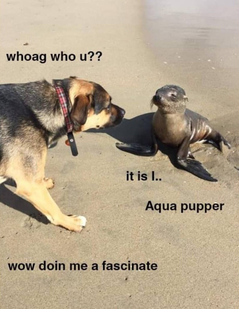 Pic of a dog meeting a seal who calls himself 'Aqua Pupper'