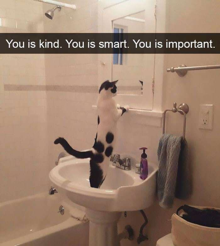 "Picture of a cat looking in the mirror with the caption, ""You is kind. You is smart. You is important"""