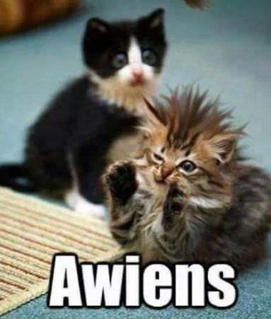 Cat - Awiens