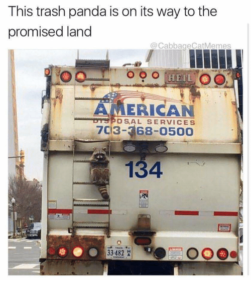 Transport - This trash panda is on its way to the promised land @CabbageCatMemes OO HEIL AMERICAN DYSPOSAL SERVICES 7C3-368-0500 134 33-482