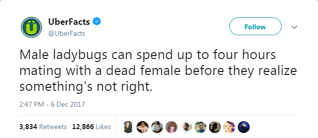 Text - UberFacts Follow @UberFacts Male ladybugs can spend up to four hours mating with a dead female before they realize something's not right. 2:47 PM - 6 Dec 2017 3,834 Retweets 12,866 Likes
